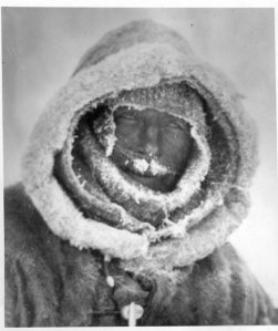 A faithful and often fateful companion, portrait of Alfred Wegener, Greenland Expedition 18__.